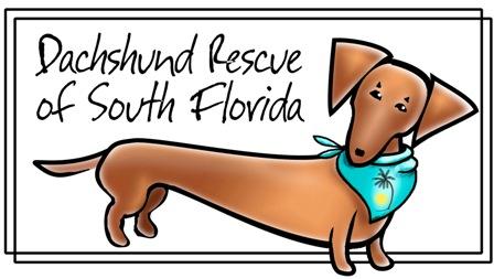 Dachshund Rescue South Florida